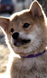 Hachicko: a dog's story, l'evento fuori concorso che commuove tutti - Una trama ridotta all'osso
