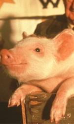 Film in Tv: E arriva febbraio... - Animali parlanti e abitudini alimentari