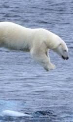 Earth - La nostra terra, il film - Riprendere le Bestie bianche dell'Artico