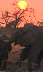 Earth - La nostra terra, il film - Riprendere l'elefante del deserto