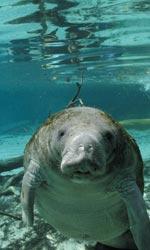 Oceani 3D e il mistero dell'oceano profondo - Di chi era la voce nella versione originale?