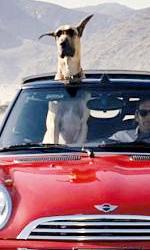 Film nelle sale: le creature non sono pi� quelle di una volta - Un cane per amico/nemico