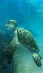 L'ora di biologia marina - Una scena del film d'animazione Le avventure di Sammy.