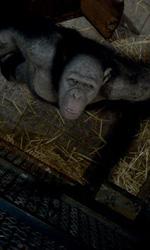 Andy Serkis, l'uomo scimmia - Lo scimpanz� in gabbia nel film L'alba del pianeta delle scimmie.
