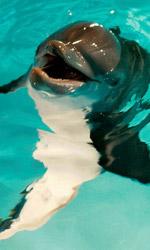 L'incredibile storia di Winter il delfino, il coraggio e la speranza - Una scena del film L'incredibile storia di Winter il delfino.