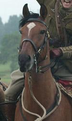 War Horse, un racconto di lealt�, speranza e perseveranza - Una foto del film War Horse di Steven Spielberg.