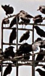 ONDA&FUORIONDA - In foto una scena tratta da Gli uccelli di Hitchcock.