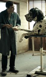 In foto Marcello Fonte (41 anni) Dall'articolo: Dogman, una prova di cinema allo stato puro.