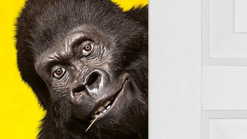 Attenti al gorilla, il poster del film