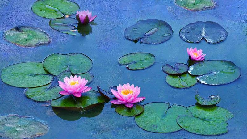 Le Ninfee di Monet, omaggio all'artista che ha cambiato la pittura