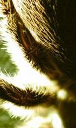 The Collector: prime immagini del film di Dunstan - Un'immagine del film