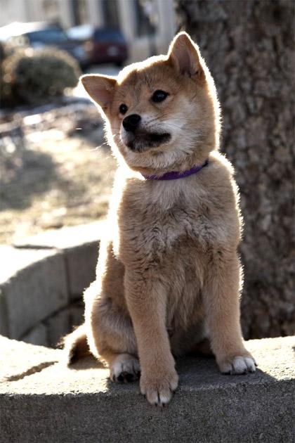 Una trama ridotta all'osso -  Dall'articolo: Hachicko: a dog's story, l'evento fuori concorso che commuove tutti.