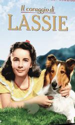 Lassie, 3 classici in dvd - Il coraggio di Lassie