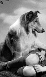 Ritrovando Lassie - Pit Bull