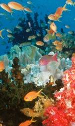 Oceani 3D e il mistero dell'oceano profondo - Le profondità sottomarine in 3D