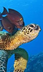 Oceani 3D e il mistero dell'oceano profondo - Come spettatori, non avreste lasciato parlare di più le immagini?