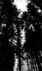 La fotogallery del film Kill Me Please - Il bosco che circonda la clinica del Dott. Kruger.
