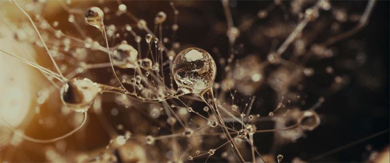 Una foto del film Eva di Kike Maillo. -  Dall'articolo: MYmovies per Venezia 2011.