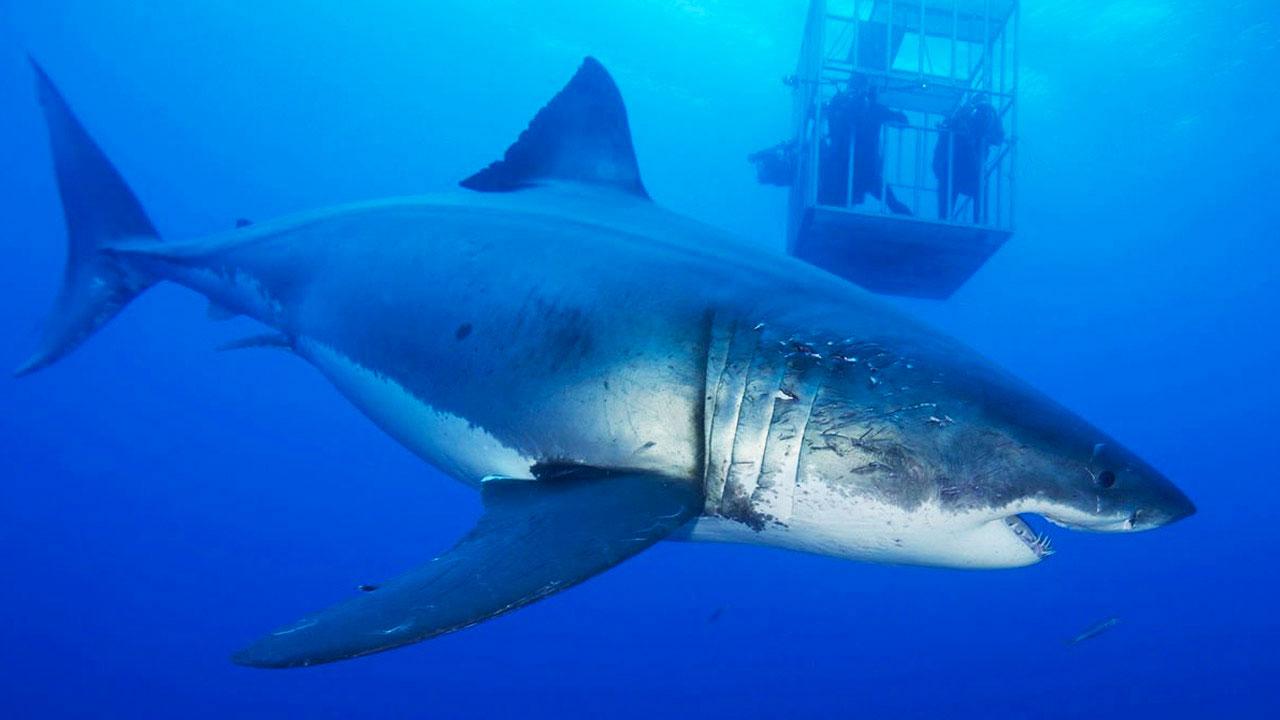 -  Dall'articolo: Lo shark movie, un filone horror diventato ormai un genere a sé.