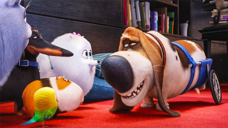 Pets, It e Young Sheldon: tutte le uscite di marzo su Infinity