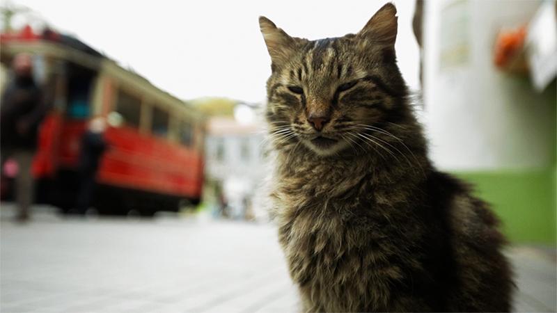 Kedi - La città dei gatti, dichiarazione d'amore per i gatti di Istanbul
