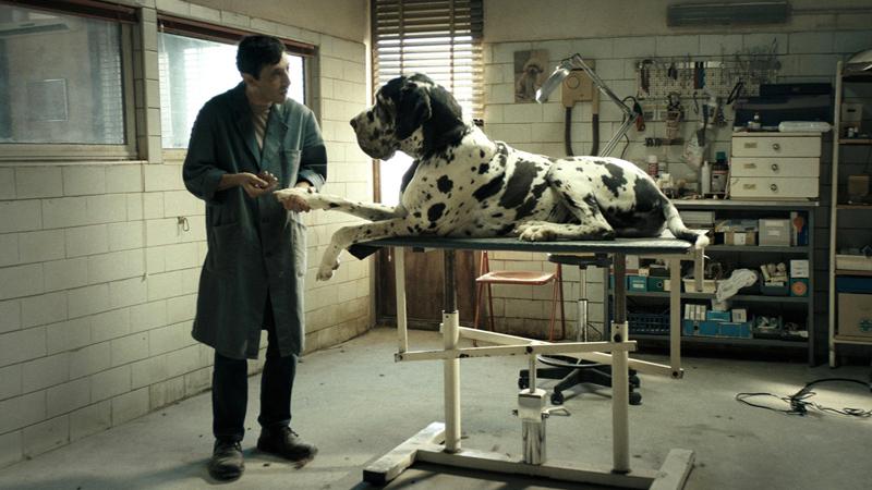 Dogman, una prova di cinema allo stato puro
