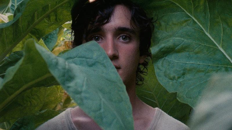 Lazzaro Felice e Girl, premi a Cannes acquisiti da Netflix
