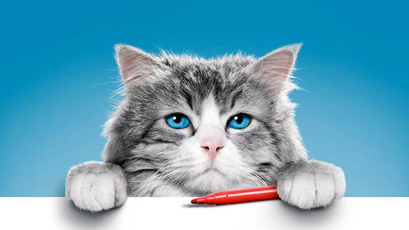 Una vita da gatto, tanti buoni sentimenti per una divertente commedia natalizia
