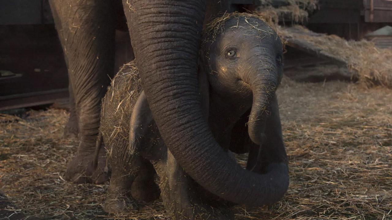 È il giorno di Dumbo e Bentornato Presidente!. Il box office può tornare a respirare?
