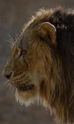 -  Dall'articolo: Il Re Leone ruggisce al Box Office: è il 15° miglior giorno d'esordio della storia del cinema americano.