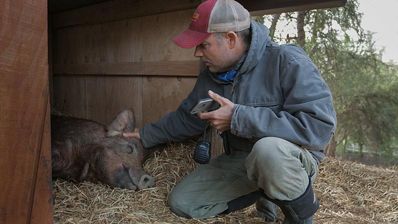 In foto una scena del film La fattoria dei nostri sogni. -  Dall'articolo: La fattoria dei nostri sogni, guarda l'inizio del film [HD].
