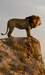 -  Dall'articolo: Il Re Leone a un passo dai 30 milioni, ma oggi arriva It - Capitolo 2.