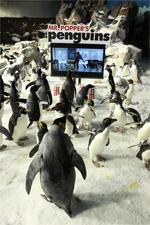 Poster I pinguini di Mr. Popper  n. 3