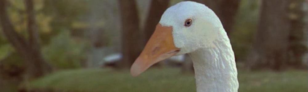 Goose! un' Oca in Fuga