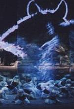 Dal Teatro Carlo Felice di Genova: Macbeth