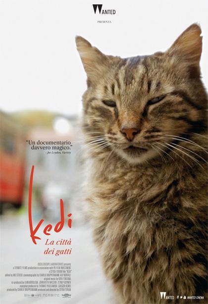 Trailer Kedi - La Città dei Gatti