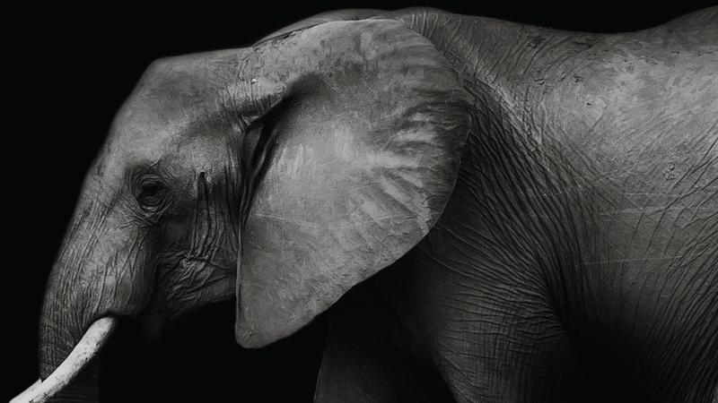 Ivory - A Crime Story