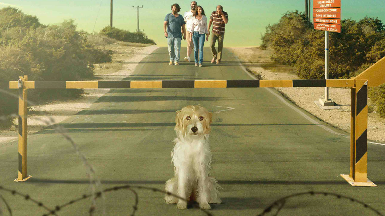 Torna a casa, Jimi! 10 cose da non fare quando perdi il tuo cane a Cipro