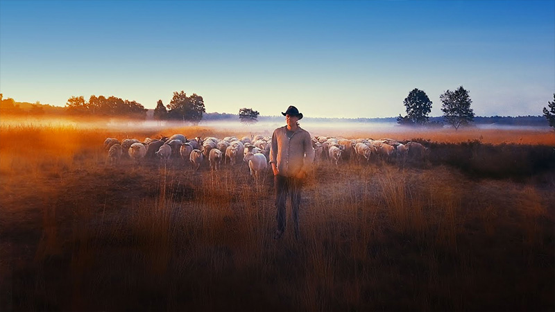 Sheep Hero