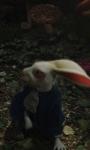 Alice in Wonderland: la richiesta di fidanzamento ad Alice nel trailer inglese