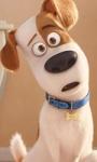 Box Office USA, $ 11.000.000 al giorno per Pets, il film dei record