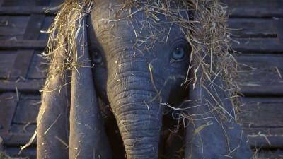 Dumbo: l'elogio della diversità secondo Tim Burton