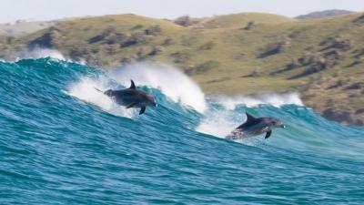Echo - Il delfino, un viaggio iniziatico lungo le magiche coordinate Disney